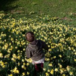 Even More Daffodils!
